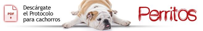 Protocolo para el cuidado de cachorros. Perros